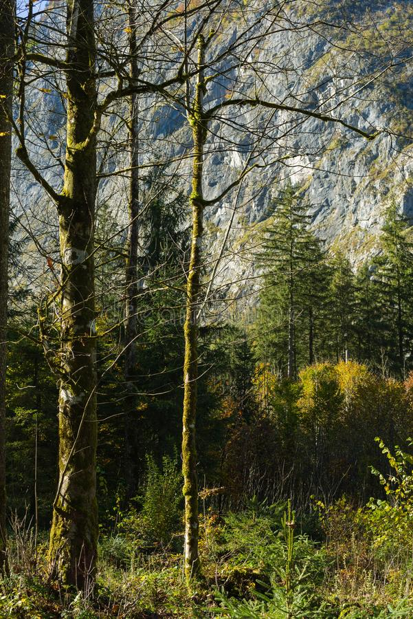 Autum forrest single trees in front royalty free stock photography