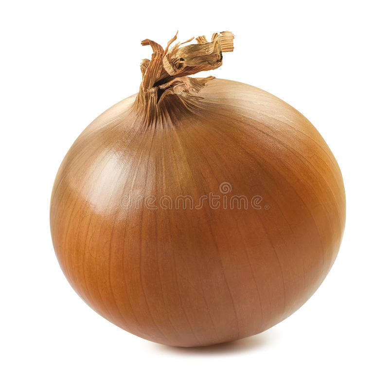 Single onion bulb isolated on white background royalty free stock photos