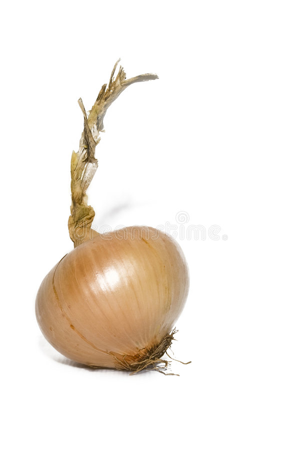 Single onion isolated. Over white stock image