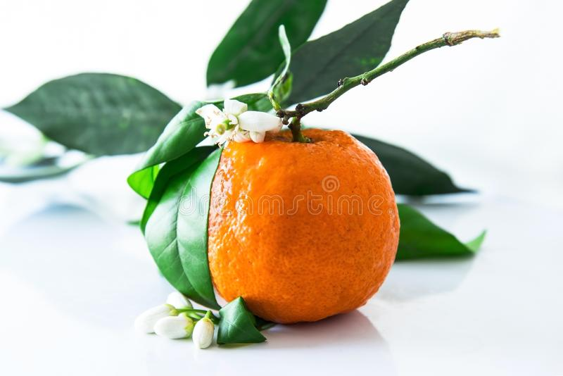 Single orange with blossoms and leaves stock photos