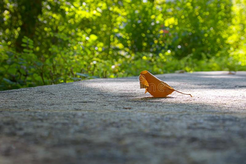 Single orange maple autumn leaf in sunlight on a wall green back royalty free stock images