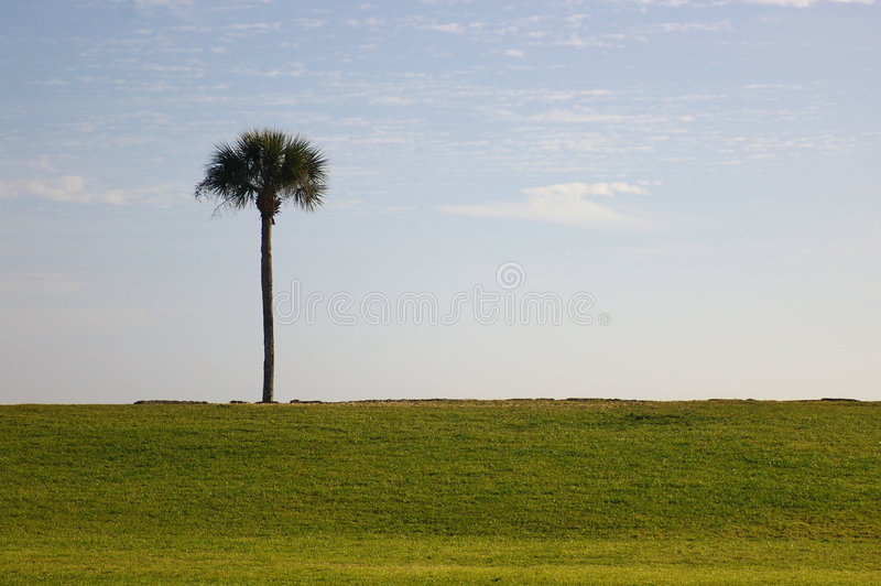 Download Single palm stock photo. Image of warm, exotic, tourist - 504808