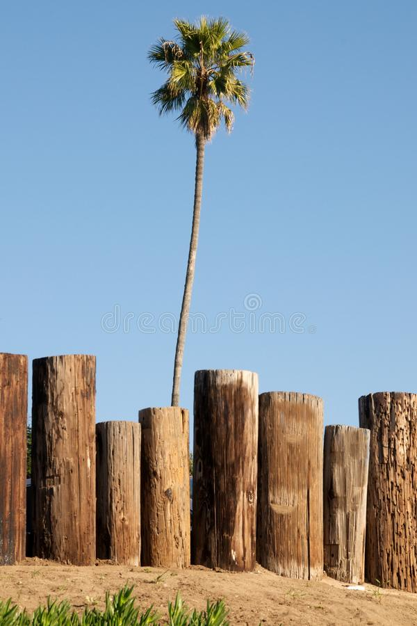 Download Single palm tree stock image. Image of romantic, tree - 18050119