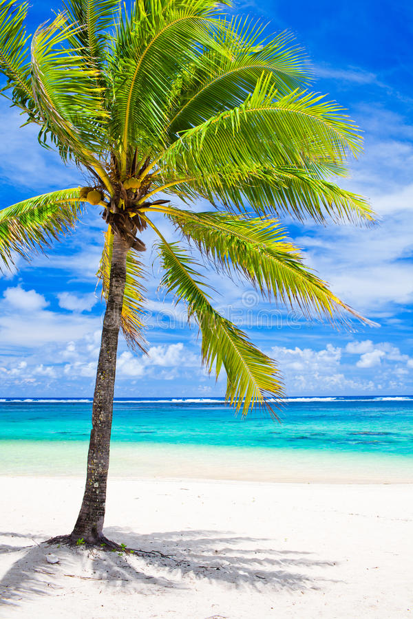 Single palm tree overlooking amazing lagoon royalty free stock images