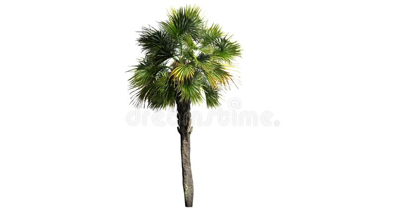 Single Palmetto palm tree. Isolated on white background stock illustration