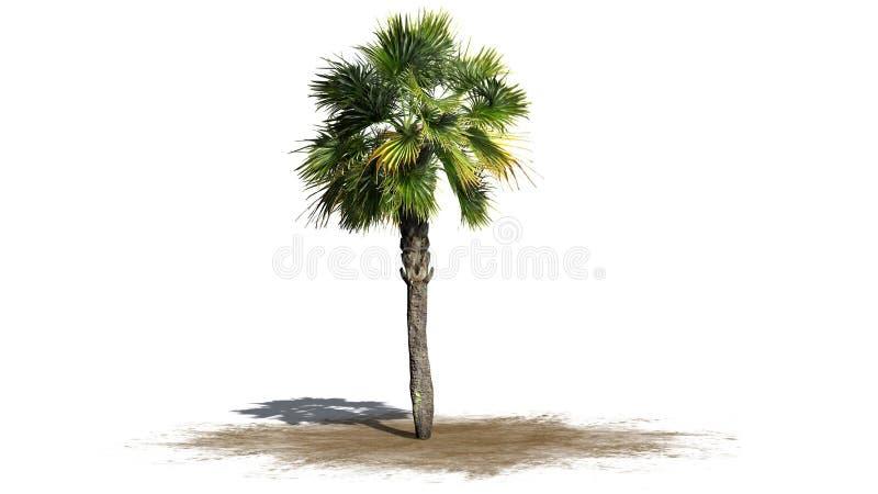 Single Palmetto palm tree. Isolated on white background stock illustration