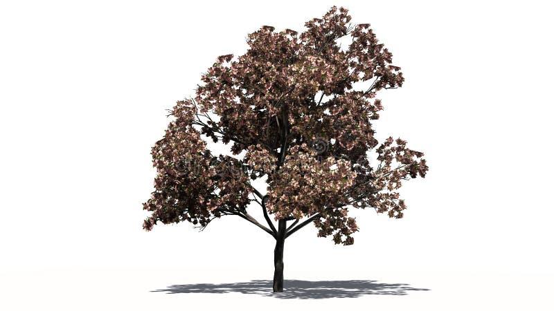 Single Peach trees in the autumn stock image