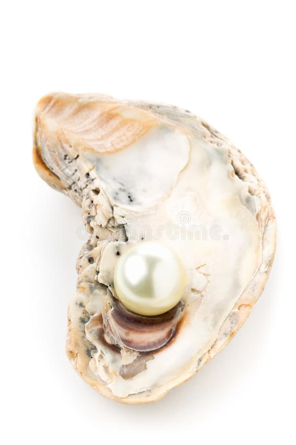 Single pearl in oyster sea shell stock photos