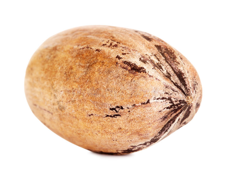 Single Pecan Nut In A Shell stock images