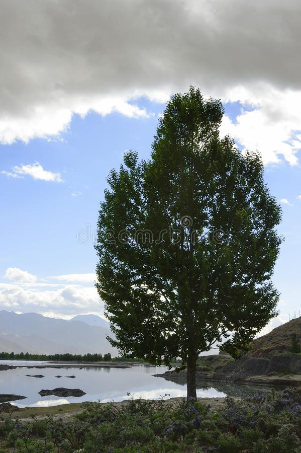 A single pine tree stands by the edge of a river under a cloudy sky at the foot of Himalayan mountains in the Brahmaputra Valley i. N theTibet Autonomous Region royalty free stock images