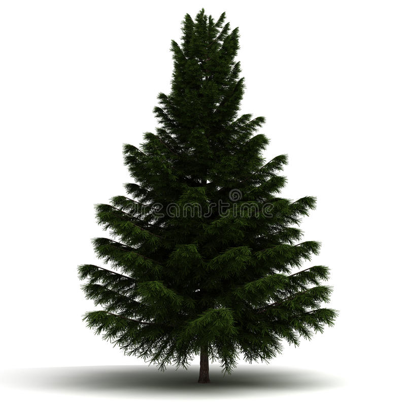 Single Pine Tree royalty free illustration