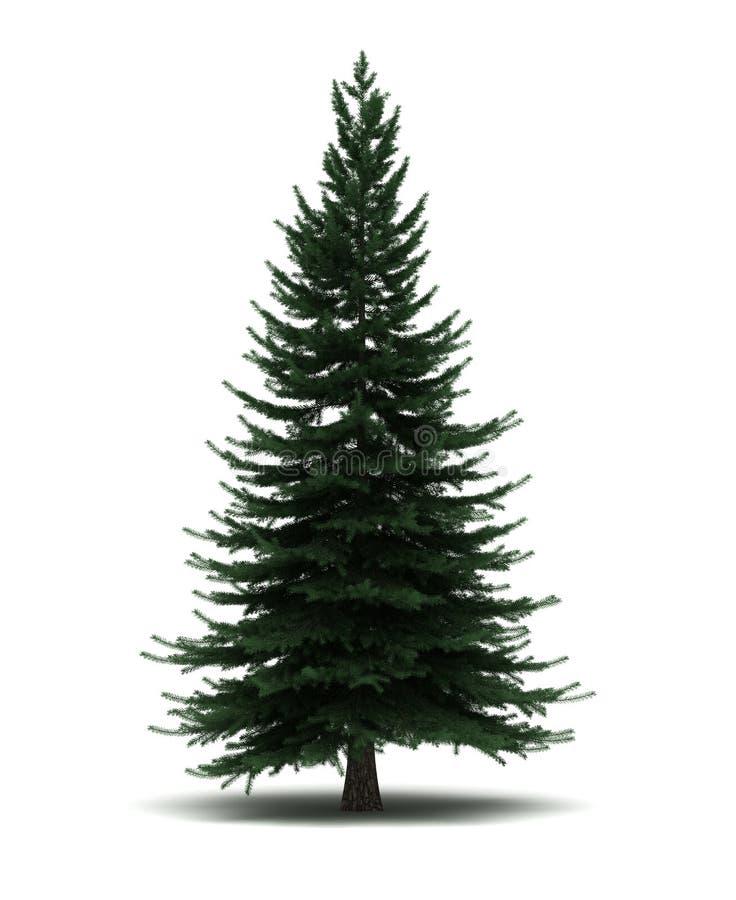 Single Pine Tree. ( on white stock illustration