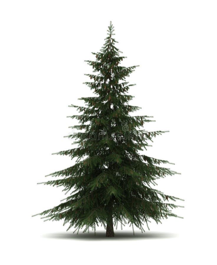 Single Pine Tree. ( on white vector illustration