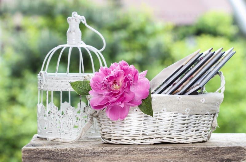 Single pink peony flower royalty free stock photo