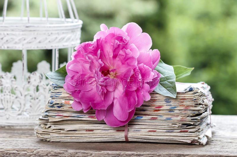 Single pink peony flower in white wicker basket royalty free stock images