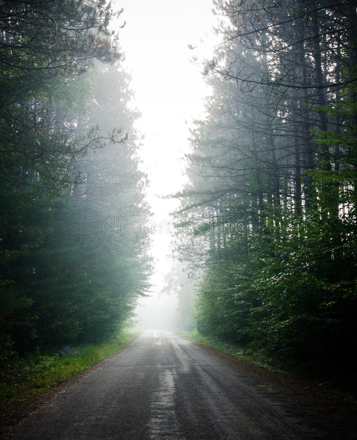Single point perspective down fog obscured, forest-lined road. royalty free stock image