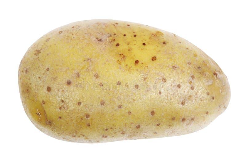 Download Single Potato Stock Photography - Image: 23493692