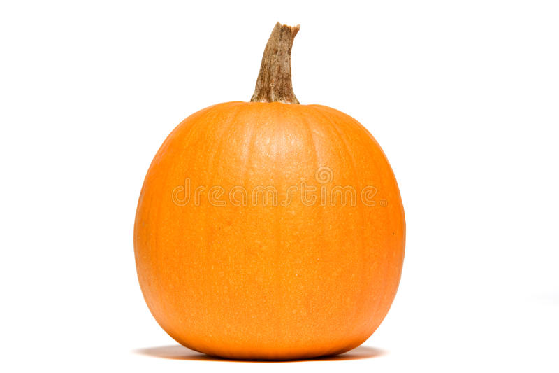 Download Single Pumpkin stock photo. Image of organic, pumpkins - 11290626