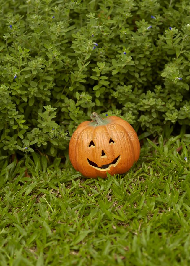 single pumpkin on green grass royalty free stock image