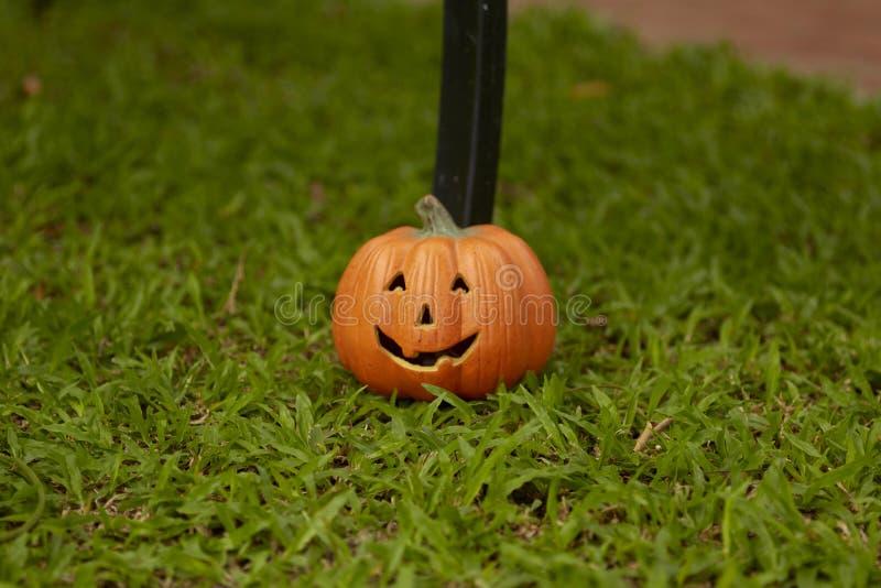 single pumpkin on green grass stock photo