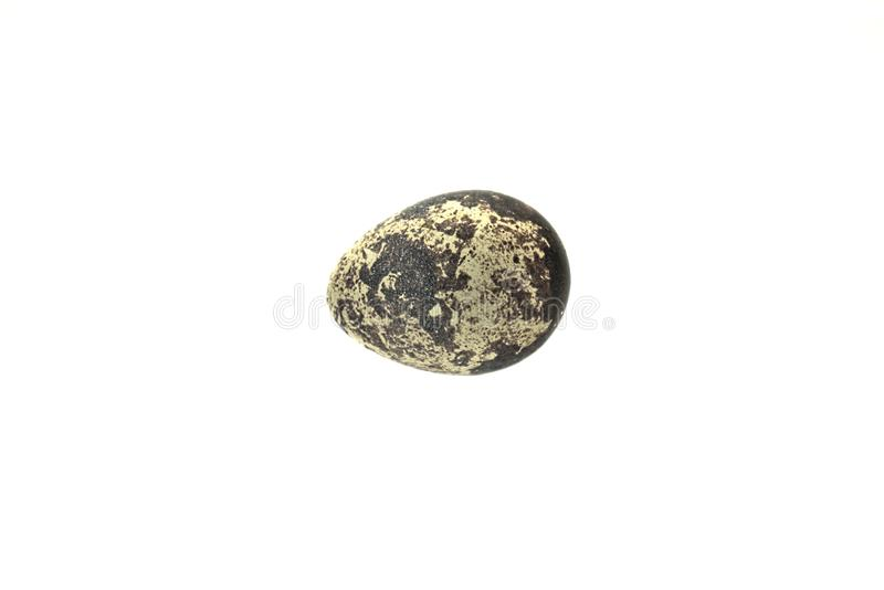 A single quail egg on an all white background. stock images