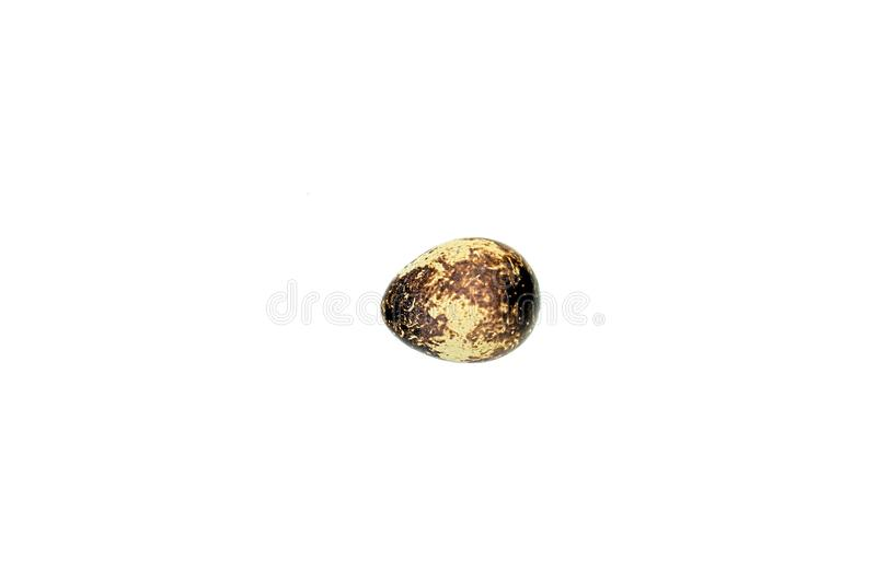 A single quail egg on an all white background. stock photography