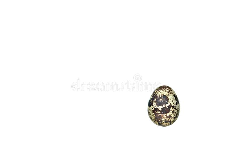 A single quail egg on an all white background. royalty free stock photos