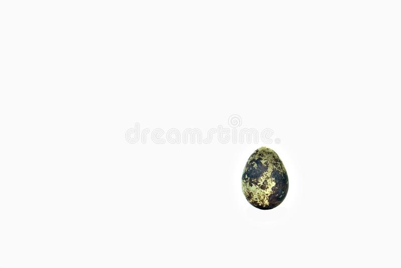 A single quail egg on an all white background. royalty free stock image
