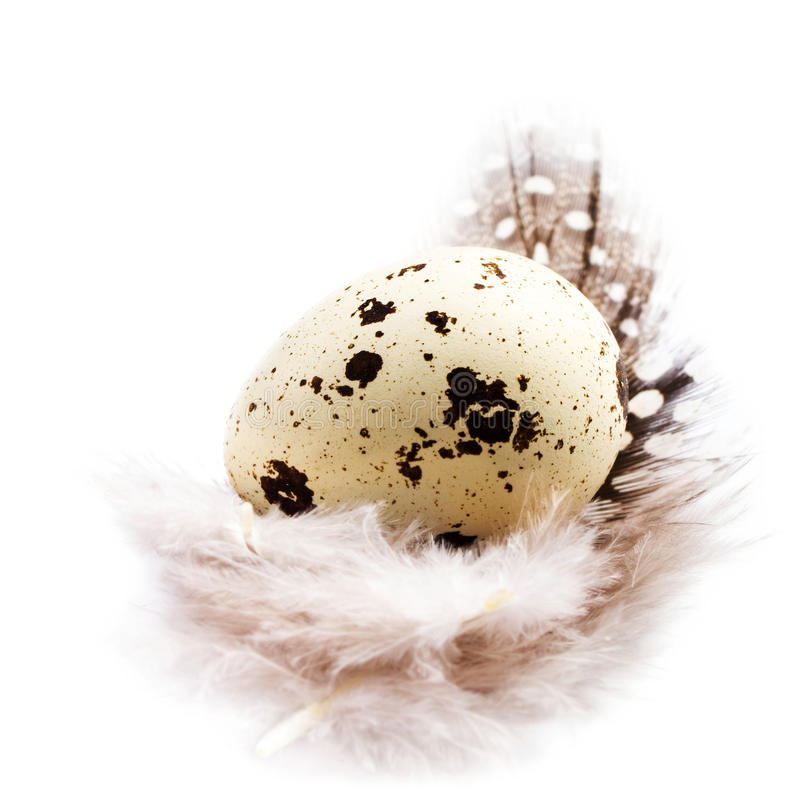 Single quail egg with a feather isolated on white background, ma. Cro with copyspace for text stock photo