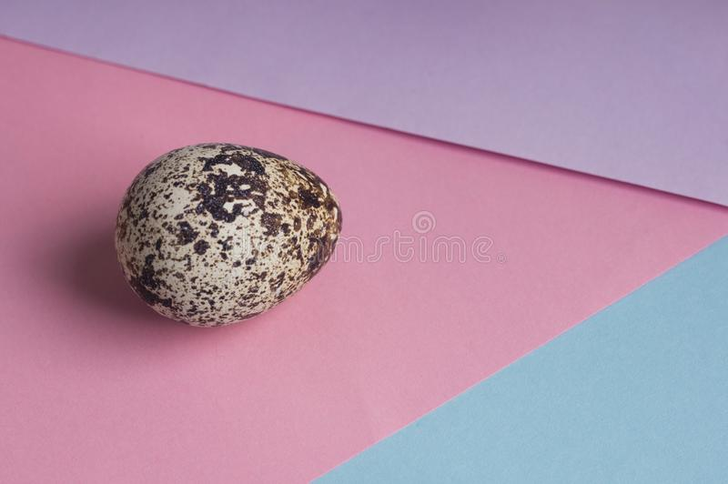 Single quail eggs on color background. Vegetarian organic eco food. top view stock photos