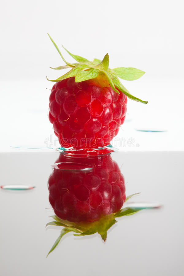 Download Single raspberry stock image. Image of green, fotosammlungen - 20501051