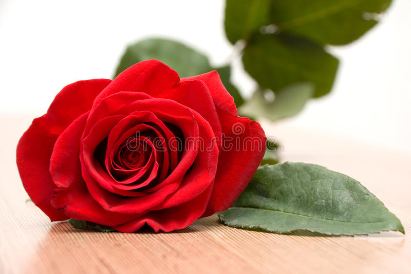 Single Red Rose Royalty Free Stock Photography