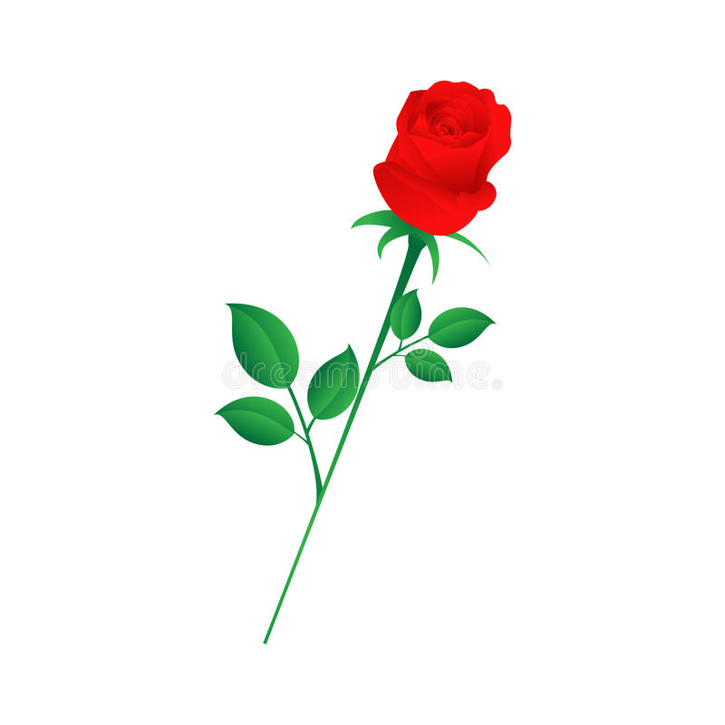 Download Single Red Rose Stock Images - Image: 12414094