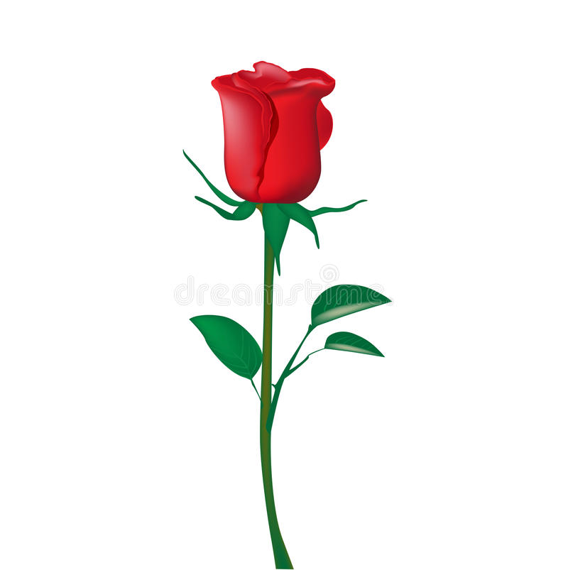 Download Single red rose stock vector. Image of gardening, concept - 25799701