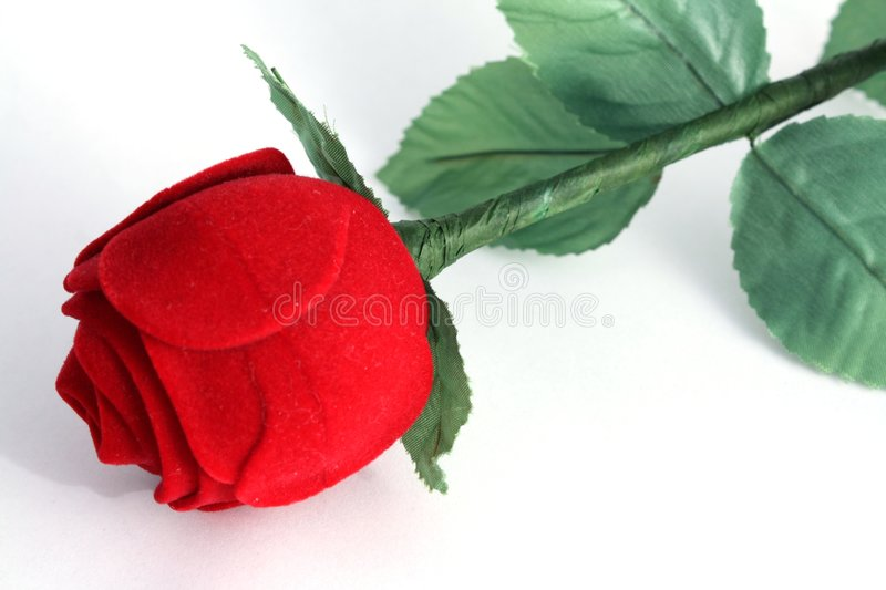 Download Single Red Rose Stock Photography - Image: 7755722