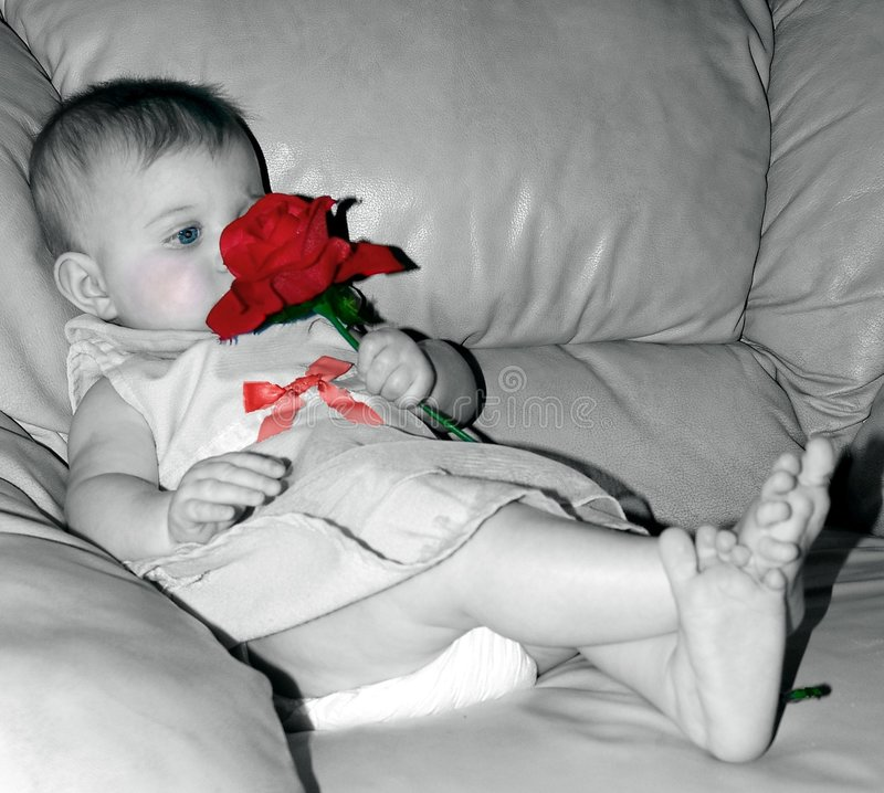 Single Red Rose For Baby royalty free stock images