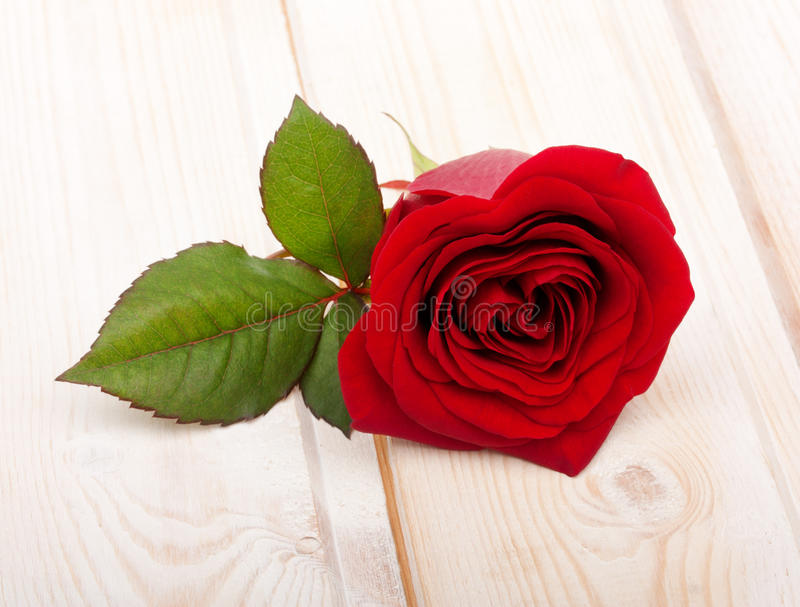 Single Red Rose Flower Stock Images: Single Red Rose Flower Stock Image. Image Of Romance