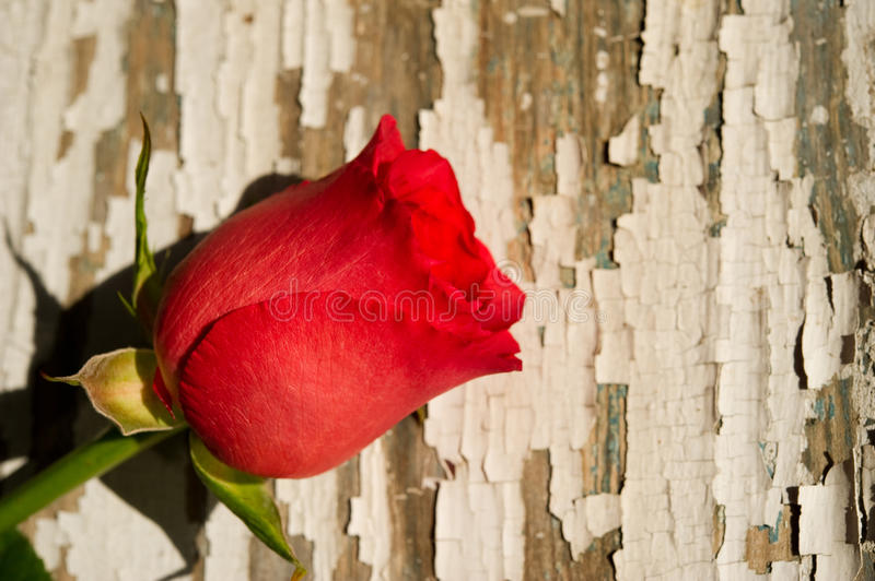 Download Single Red Rose On Rustic Background Stock Image - Image: 12514101