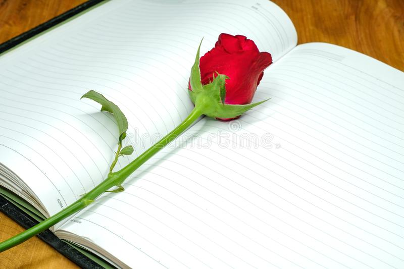 A single red rose. Lying on a page of a notebook, top view, copy space royalty free stock images