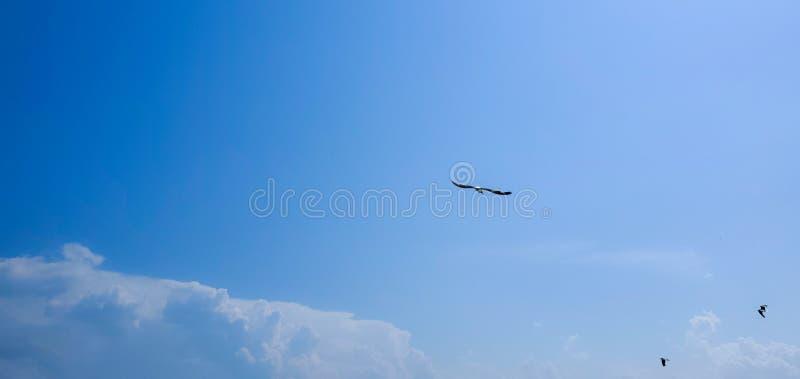 Single seagull flying. Beautiful sky. Single seagull flying on a blue sky background. Blue Background. New York. Image stock photography