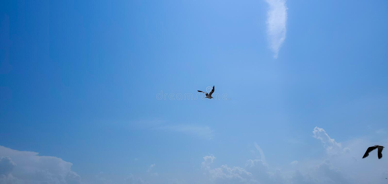Single seagull flying. Beautiful sky. Single seagull flying on a blue sky background. Blue Background. New York. Image stock photo