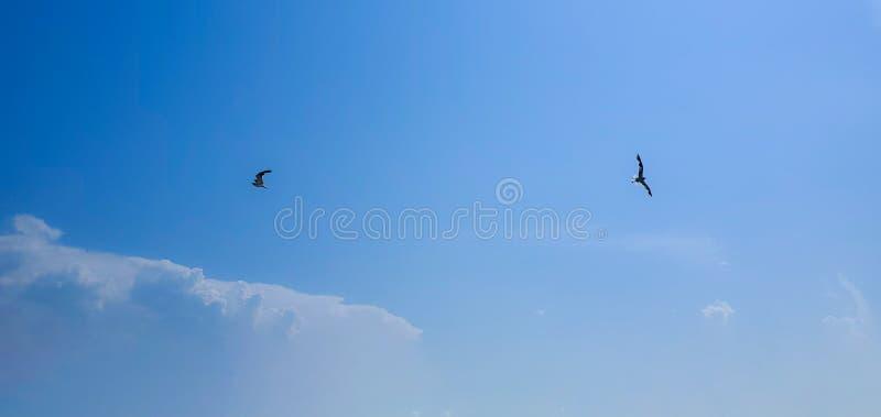 Single seagull flying. Beautiful sky. Single seagull flying on a blue sky background. Blue Background. New York. Image royalty free stock image