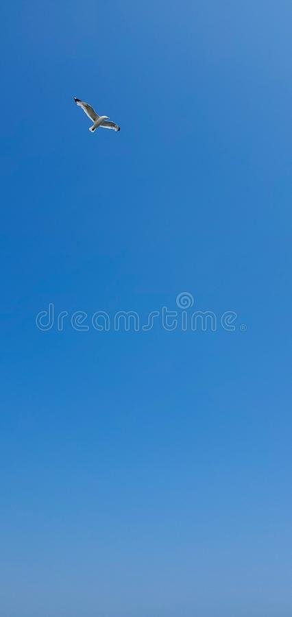 Single seagull flying on a blue sky background. Image. Usa, New York stock image
