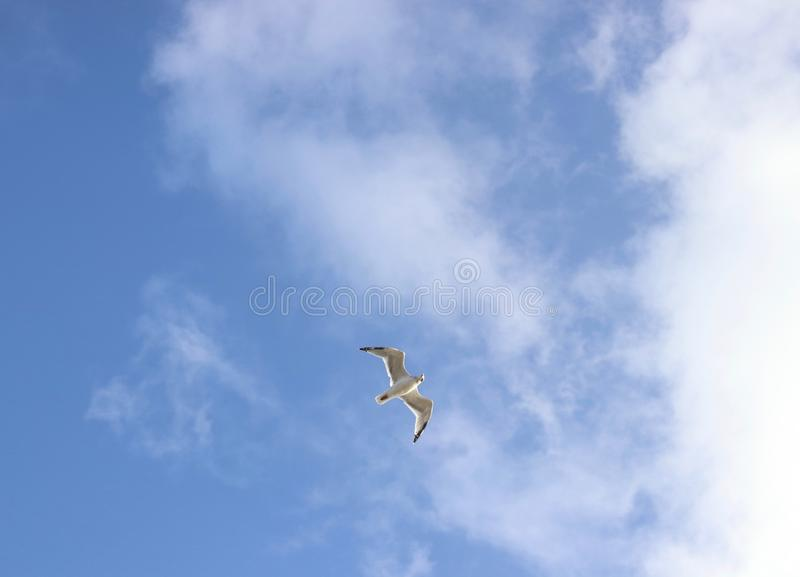 Single seagull flying to the cloud, on the sky royalty free stock images