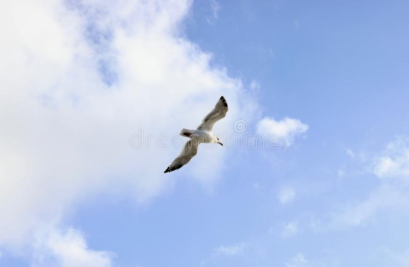 Single seagull on the sky stock image