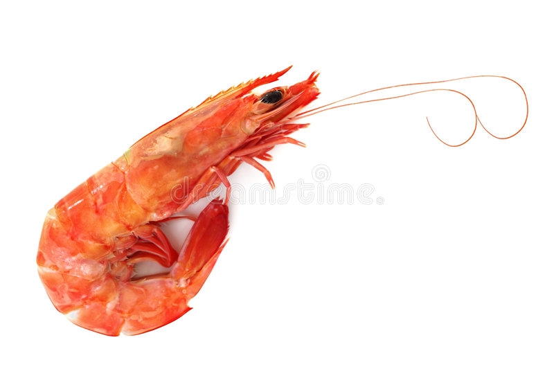 Single Shrimp stock photo