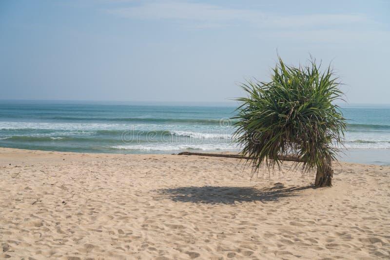 Single small palm tree on the beach over sea and sky. Single small palm tree hanging on sandy beach over sea and sky background during summer day royalty free stock photos