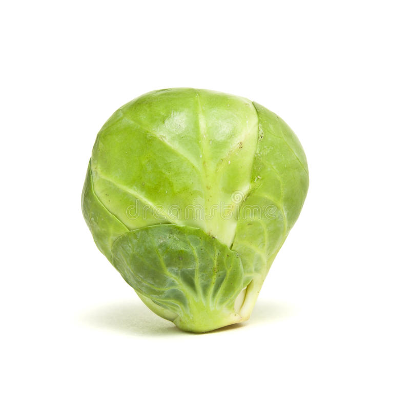 Single Sprout. Single Brussel Sprout from low perspective isolated against white stock photos