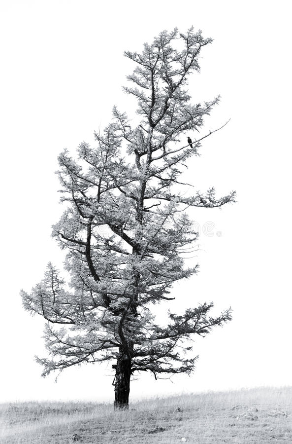 Download A Single Standing Tree With A Black Bird Stock Image - Image of crow, plant: 11861463