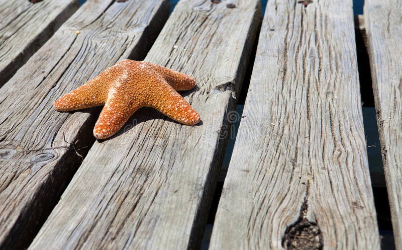Single starfish on wooden jetty royalty free stock photos